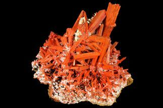 "2.55"" Bright Orange Crocoite Crystal Cluster - Tasmania For Sale, #129101"