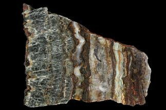 Rare North Pole Dome Stromatolite Slice - 3.49 Billion Years For Sale, #129185