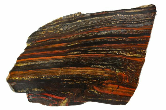 "6.2"" Polished Tiger Iron Stromatolite - 3.02 Billion Years"