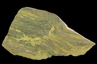 "9.3"" Polished Stromatolite (Kussiella) Slab - 1.88 Billion Years For Sale, #129227"