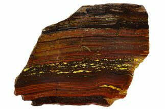 "Buy 5.9"" Polished Tiger Iron Stromatolite - 3.02 Billion Years - #129265"
