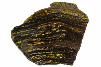 "Buy 4.4"" Polished Tiger Iron Stromatolite - 3.02 Billion Years - #129295"