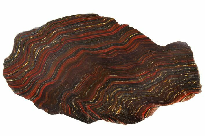 "14.5"" Polished Tiger Iron Stromatolite - 3.02 Billion Years"