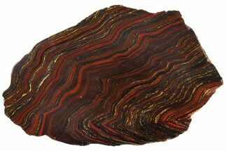 "14.4"" Polished Tiger Iron Stromatolite - 3.02 Billion Years For Sale, #129341"