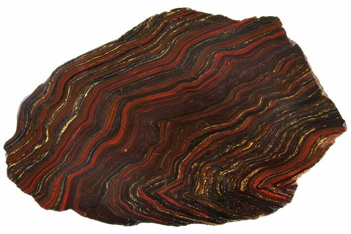 "14.4"" Polished Tiger Iron Stromatolite - 3.02 Billion Years"