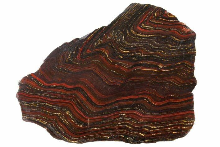 "13.1"" Polished Tiger Iron Stromatolite - 3.02 Billion Years"