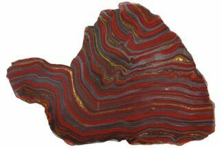 "14.8"" Polished Tiger Iron Stromatolite - 3.02 Billion Years For Sale, #129344"