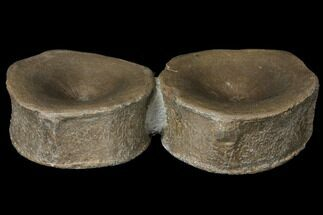 "Buy 3.7"" Two Beautiful Ichthyosaurus Vertebrae - Germany - #129406"