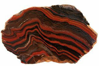 "10.3"" Polished Tiger Iron Stromatolite - 3.02 Billion Years For Sale, #129431"