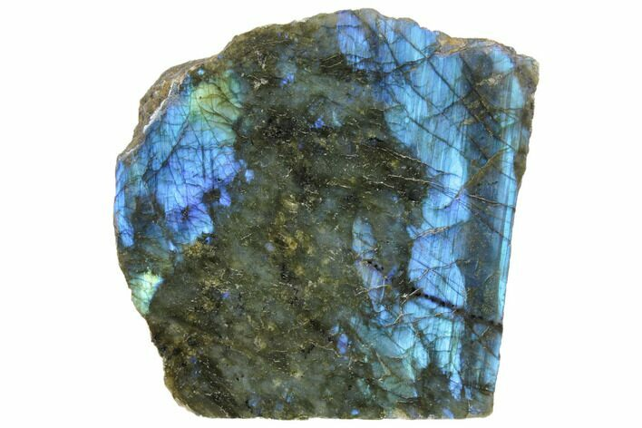 "5.2"" Wide, Single Side Polished Labradorite - Madagascar"