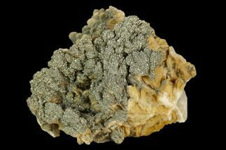 Barite & Pyrite - Fossils For Sale - #130503