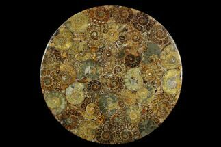 "8.3"" Composite Plate Of Agatized Ammonite Fossils For Sale, #130559"