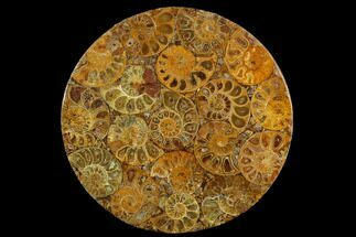 "8"" Composite Plate Of Agatized Ammonite Fossils For Sale, #130568"