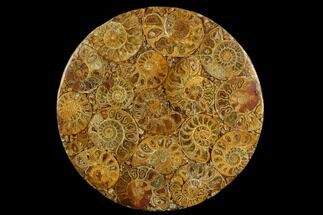 "Buy 8"" Composite Plate Of Agatized Ammonite Fossils - #130570"