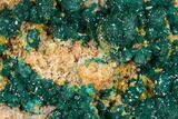 "3.1"" Gemmy Dioptase and Mimetite on Dolomite - Ntola Mine, Congo - #130500-1"