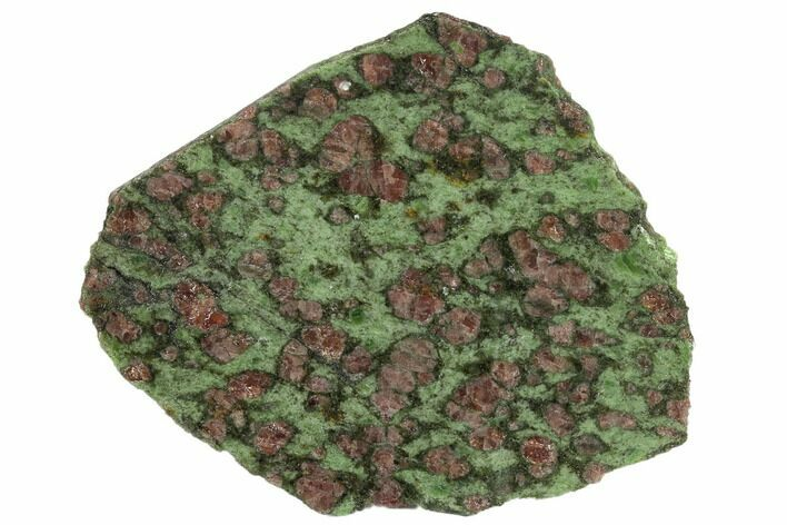 "3.6"" Polished Pyrope, Forsterite, Diopside & Omphacite Slice - Norway"