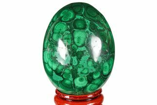 "2.1"" Flowery, Polished Malachite Egg - Congo For Sale, #131873"