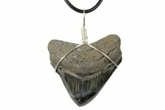 "1.75"" Fossil Megalodon Tooth Necklace For Sale, #130958"