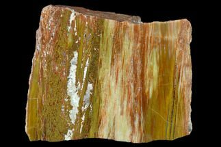 "Buy 5"" Colorful Petrified Wood (Araucarioxylon) Section - Arizona - #132238"