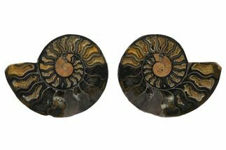 "4.35"" Cut/Polished Ammonite Fossil (Pair) - Unusual Black Color For Sale, #132569"