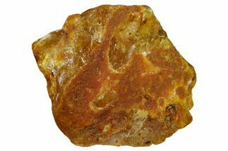 "Buy 1.8"" Rough Baltic Amber - Kaliningrad, Russia - #132829"