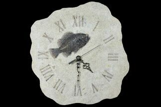 "Buy 13.8"" Tall Clock With Cockerellites Fish Fossil - Wyoming - #132877"