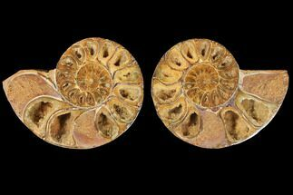 "4.4"" Cut & Polished Agatized Ammonite Fossil (Pair)- Jurassic For Sale, #131729"