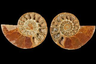 "5.2"" Cut & Polished Agatized Ammonite Fossil (Pair)- Jurassic For Sale, #131732"
