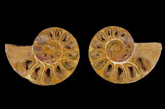 "Buy 4"" Cut & Polished Agatized Ammonite Fossil (Pair)- Jurassic - #131707"