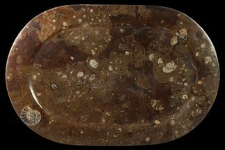 Arionoceratid Nautiloid - Fossils For Sale - #133581