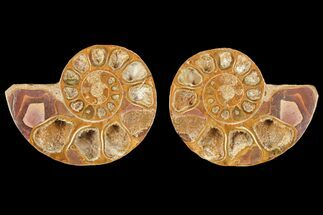 "Buy 3.4"" Cut & Polished Agatized Ammonite Fossil (Pair)- Jurassic - #131623"