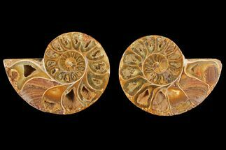 "Buy 3.9"" Cut & Polished Agatized Ammonite Fossil (Pair)- Jurassic - #131746"