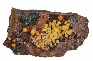 "2.3"" Vanadinite Crystals on Goethite - Mibladen, Morocco For Sale, #133883"