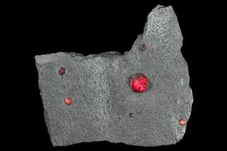 Garnet var. Almandine & Graphite - Fossils For Sale - #135480