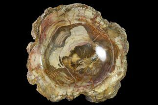 "Buy 8.5"" Colorful Polished Petrified Wood Dish - Madagascar - #135763"