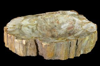 "Bargain, 8.4"" Colorful Polished Petrified Wood Dish - Madagascar For Sale, #135764"