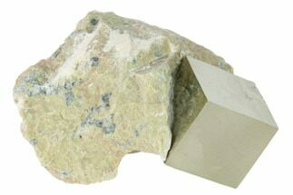 Pyrite - Fossils For Sale - #136725