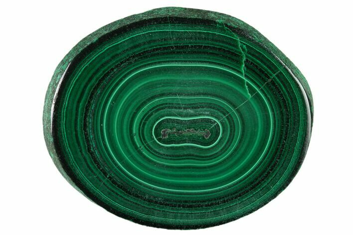 "2"" Polished Malachite Stalactite Slice - Congo"