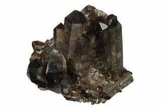 "Buy 2.4"" Dark Smoky Quartz Crystal Cluster - Brazil - #134944"