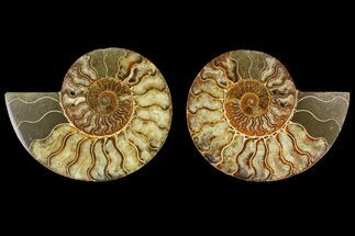 "Buy 5.4"" Agatized Ammonite Fossil (Pair) - Madagascar - #135262"