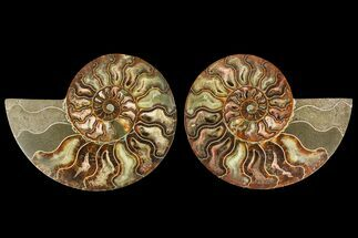 "Buy 5.3"" Agatized Ammonite Fossil (Pair) - Madagascar - #135268"