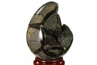 "5.7"" Septarian ""Dragon Egg"" Geode - Black Crystals For Sale, #137906"