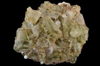 "Buy 2.4"" Light-Green, Cubic Fluorite Crystal Cluster - Morocco - #138247"