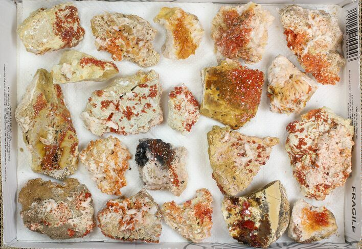 "Lot: 2-3"" Bladed Barite With Vanadinite - 20 Pieces"