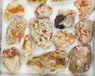 "Lot: 2-3"" Bladed Barite With Vanadinite - 20 Pieces - #138191-1"