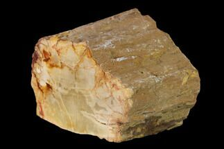 "Buy 2.2"" Colorful Petrified Wood (Araucaria) Limb - Madagascar  - #138418"
