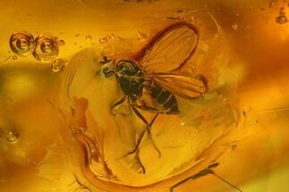 Fossil Fly (Diptera) In Baltic Amber For Sale, #139031