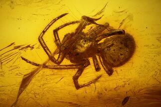 Buy Fossil Fly (Diptera) and a Spider (Araneae) In Baltic Amber - #139087