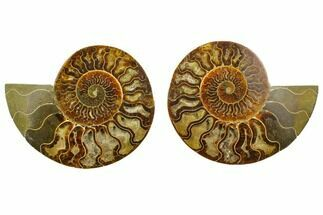 "Buy 6.6"" Agatized Ammonite Fossil (Pair) - Madagascar - #135274"