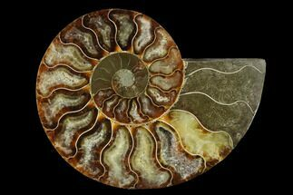 "4.55"" Agatized Ammonite Fossil (Half) - Madagascar For Sale, #139685"